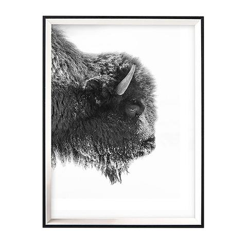 Bison Profile Framed Art With Pvc Cover 1 item